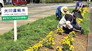 地域花壇の花植え作業状況